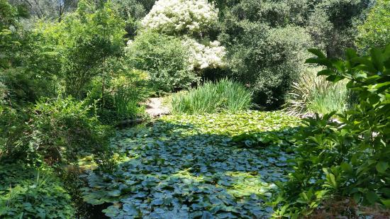 La Canada Flintridge, Californien: Lily pads upon lily pads.