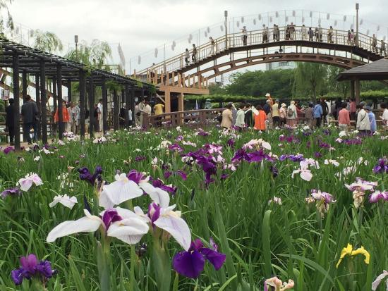 Suigo Itako Ayame Garden