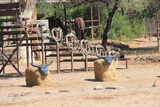 White Stallion Ranch: roping !!!