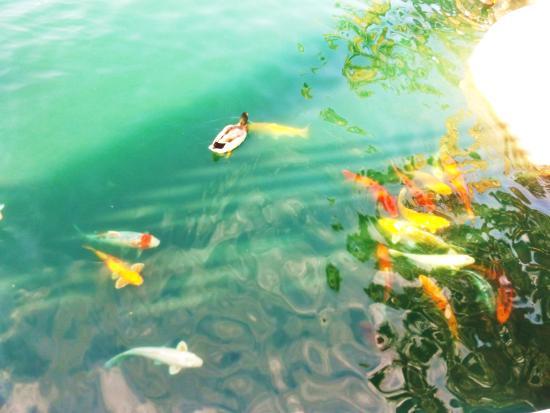 Old Town La Quinta: Great fish