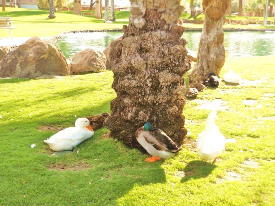 Old Town La Quinta: Beautiful birds