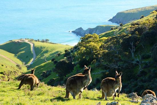 Spirit of the Fleurieu Tours