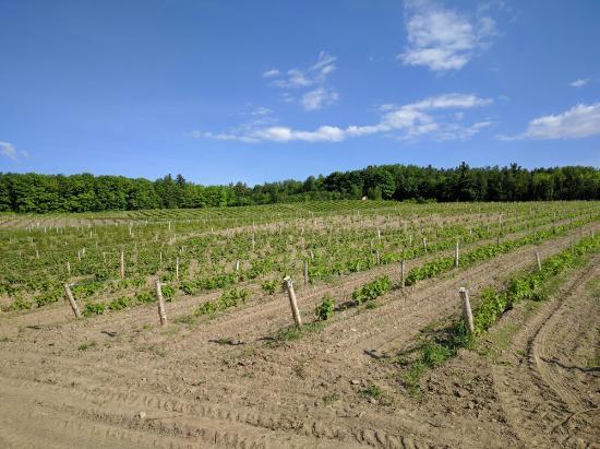 Dunham, Καναδάς: Domaine des Côtes d'Ardoise