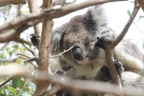 Кингскот, Австралия: No mum I won't let go