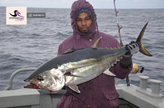 Southern Coast Charters: Catching Tuna Port Fairy