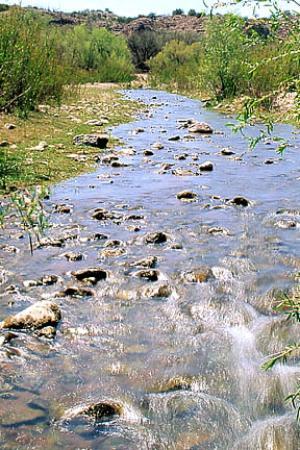 Patagonia, Arizona: Sonoita Creek Preserve