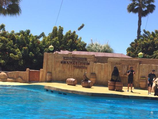 seal show - Picture of Rancho Texas Lanzarote Park, Puerto Del Carmen - TripA...