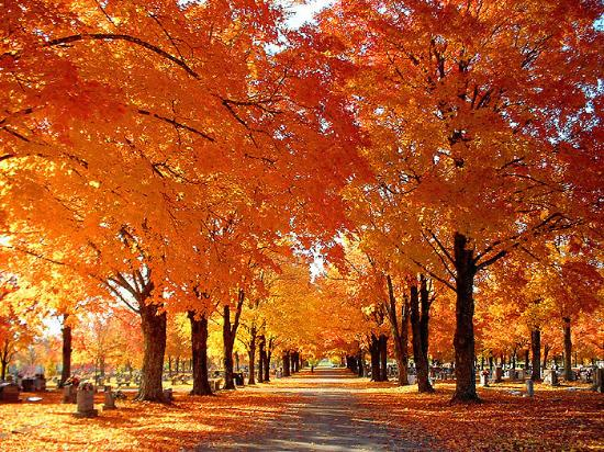 Beautiful maple trees - Review of Maplewood Cemetery, Harrison, AR ...