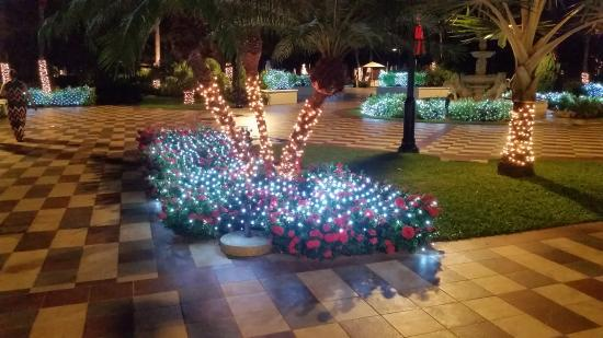 Christmas Lights In Palm Trees.Christmas Lights On Palm Trees Picture Of Sandals South