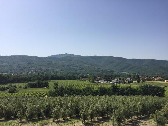 Castiglion Fiorentino, Italien: Overlooking part of the vineyard during the tour.