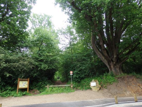 Bures-sur-Yvette, Frankrike: le chêne