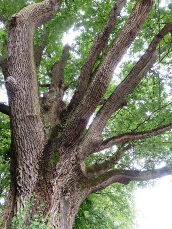 Bures-sur-Yvette, França: un arbre remarquable