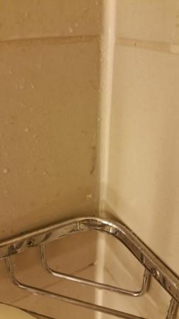 The Westin Indianapolis : Soap scum above the soap dish