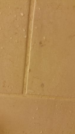 The Westin Indianapolis: Soap scum directly under the shower head