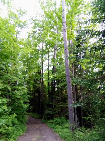 Township of Whitewater Region, Canadá: Beautiful treed paths