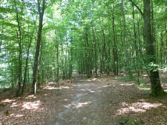 Skåne, Sverige: Lots of forest