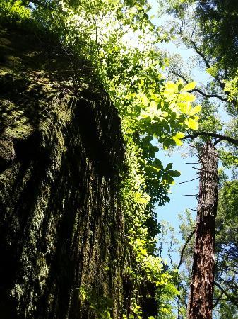 Haleyville, AL: Dismals Canyon