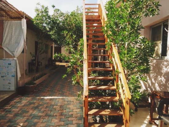 South Sinai Foto