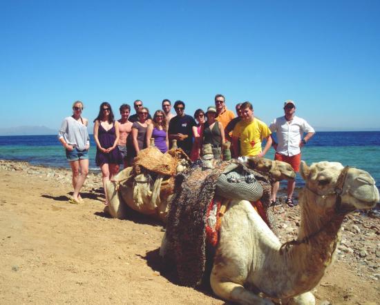 South Sinai Resmi