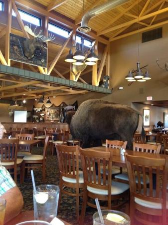Sidney, NE: Friendly buffalo