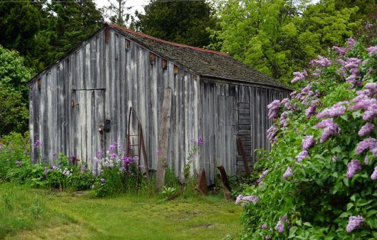 Baileys Harbor, WI: Old shed, beautiful! Never even noticed it before.
