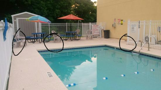Days Inn & Suites Swainsboro: The real pool picture. Circled are 2 hoses left on the ground and the black on the right side is