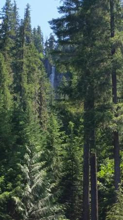 Roseburg, Орегон: 20160608_145103_large.jpg