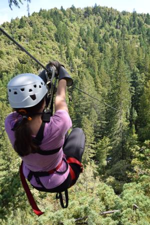 Sonoma Canopy Tours: The views were amazing from up that high