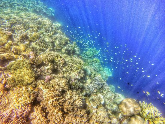 Wakatobi, Indonesië: Underwater view
