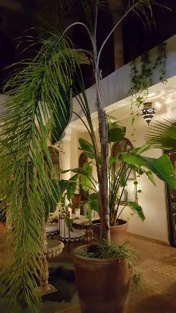 Riad Bamaga Hotel: 20160604_214753_large.jpg