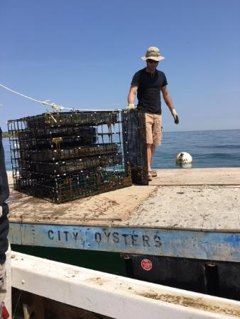 Cottage City Oyster Farm Tour