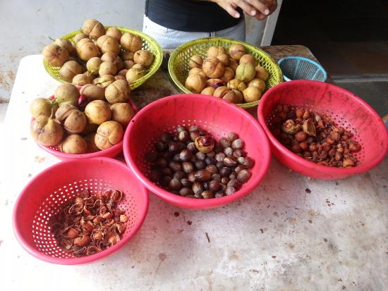 Nutmegs and their different parts and uses - Picture of Ghee Hup