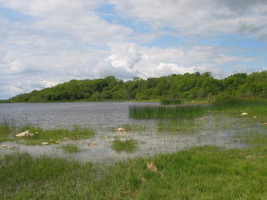 Benown House B&B : Lough Ree nearby