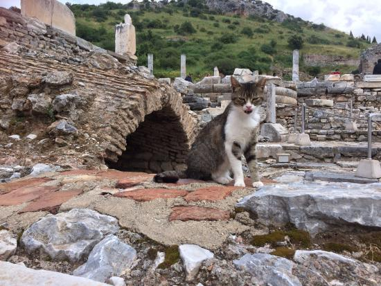 Selcuk Efes Kent Bellegi-History Museum: Local kitties