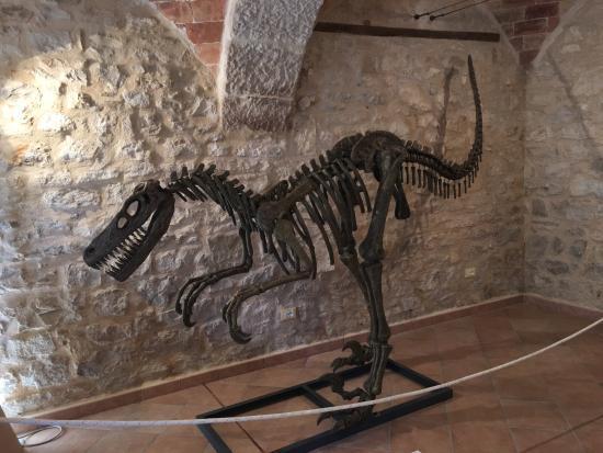 Museo dei Fossili e delle Ambre