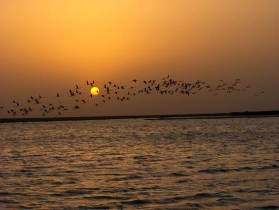 Sunset in Gavkhooni Wetland