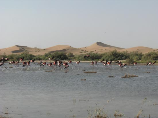 This is where life and 'death' meet! Varzaneh desert and Gavkhooni wetland
