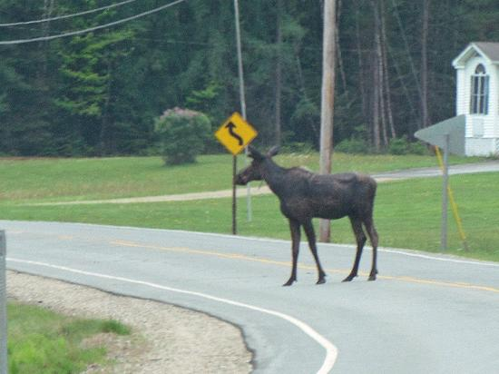 Upton, ME: Just down the road.