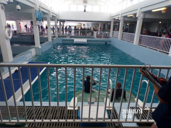 Shell Island Picture Of Clearwater Marine Aquarium
