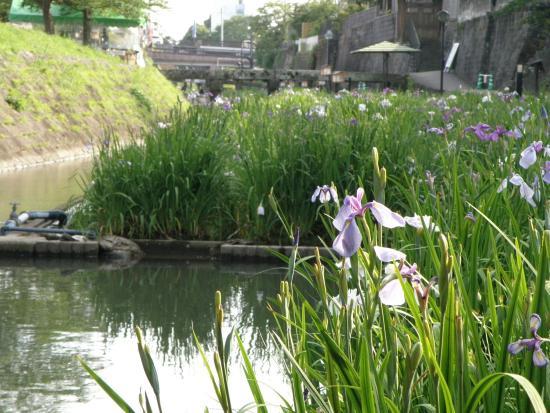 Tamana, Japan: photo0.jpg