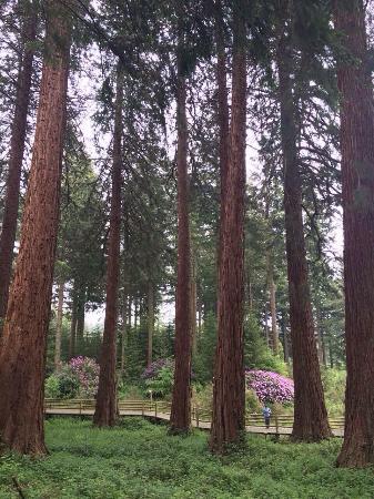 Center Parcs Longleat Forest Photo