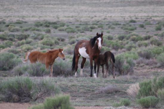 Fort Garland, CO : The wild horses of Los Caminos Antiguous...