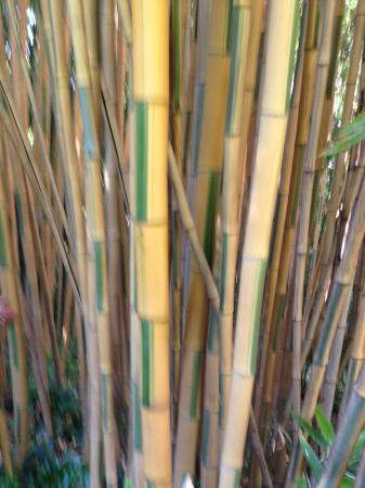 Bosco Di Bamb.Nel Bosco Di Bambu Picture Of Orto Botanico Di Roma Rome