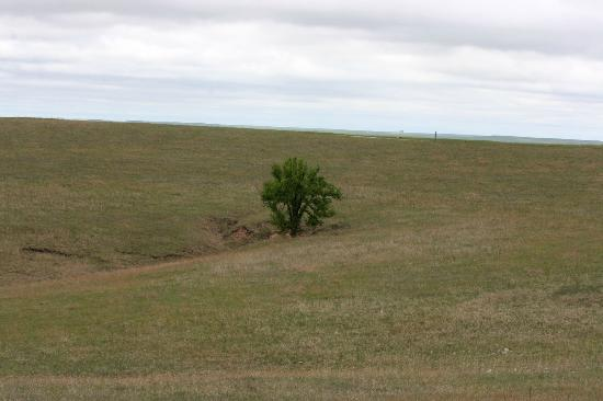 Strong City, KS: Loan Tree on the Prairie
