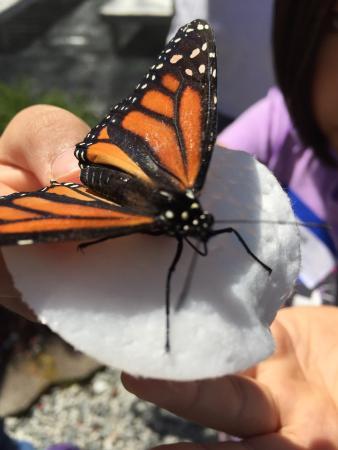 All-A-Flutter Butterfly Farm: photo0.jpg