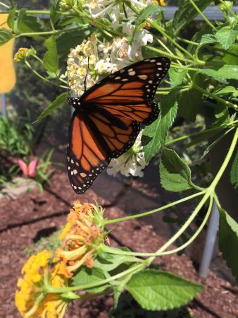 All-A-Flutter Butterfly Farm: photo3.jpg