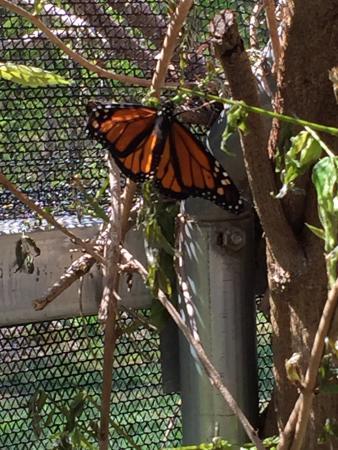 All-A-Flutter Butterfly Farm: photo5.jpg