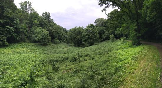 Edwin and Percy Warner Parks: Edwin Warner Park Trail Scenery