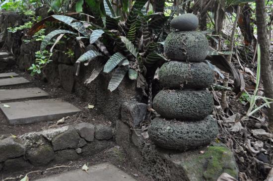 Bilde fra Holualoa