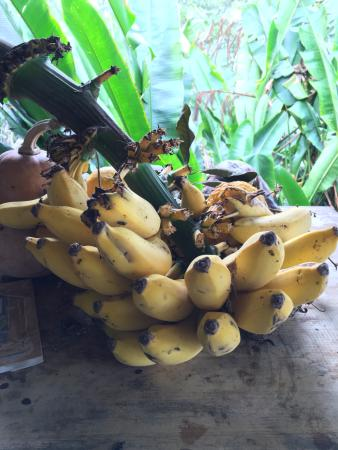 Lilikoi Inn: Fresh fruit from the farm is always available for guests